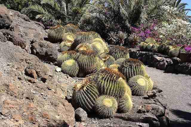 cactus hábitat natural