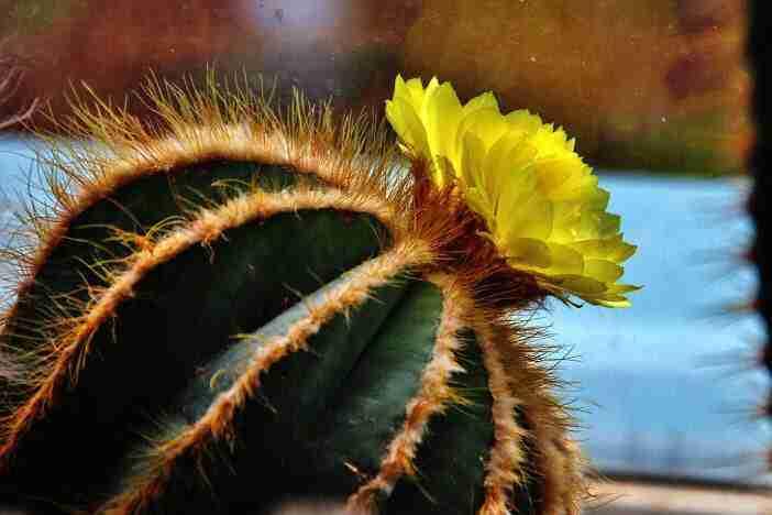epoca del año trasplantar cactus