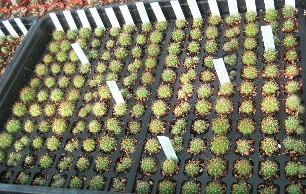 Blog de cactus pfc todo sobre cactus crasas y suculentas for Plan de negocios de un vivero de plantas