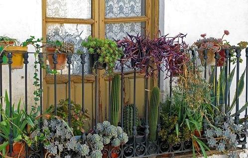 cactus jardines