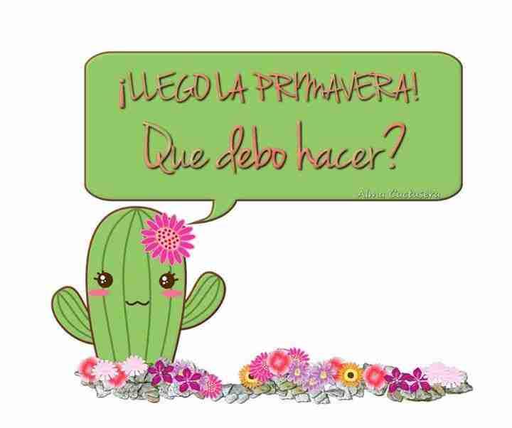 Llega la primavera, y los cactus necesitan cuidados 1