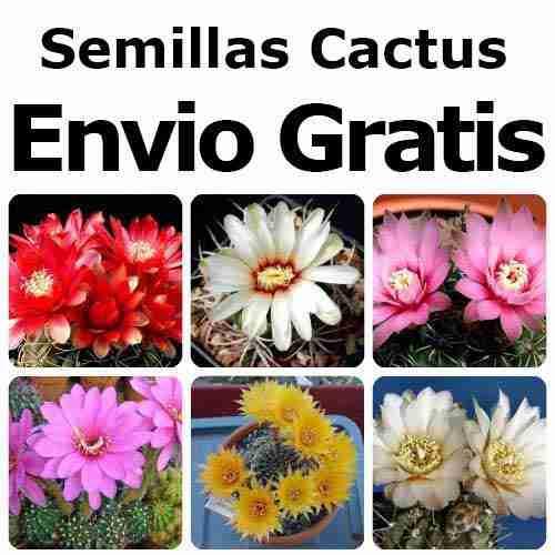 ¿Donde comprar Semillas de cactus? 1