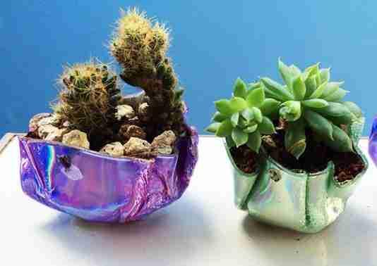 arreglos cactus y crasas