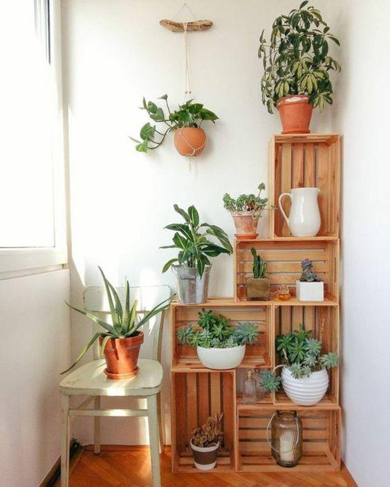 3 Secretos para tener cactus hermosos 2