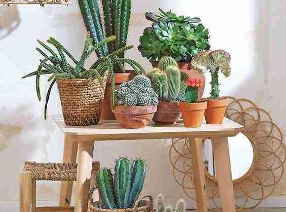 3 Secretos para tener cactus hermosos 25