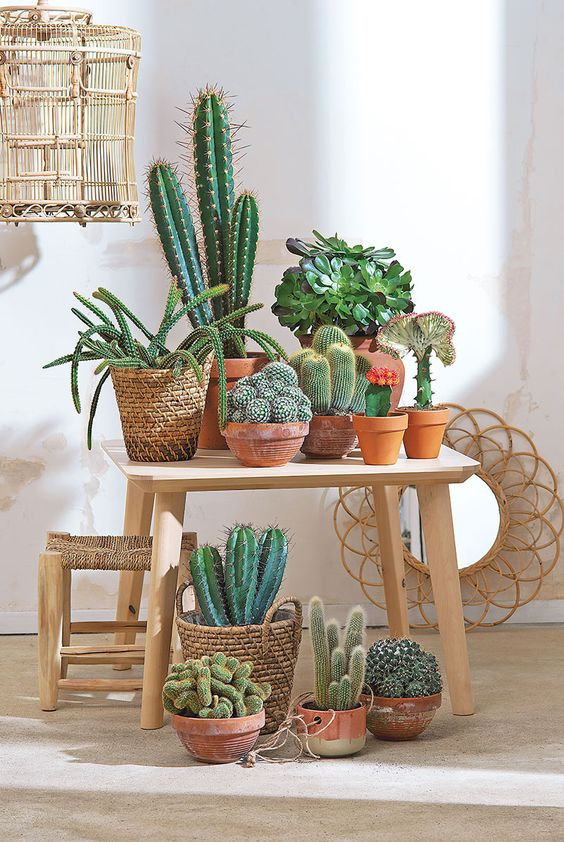 3 Secretos para tener cactus hermosos 3