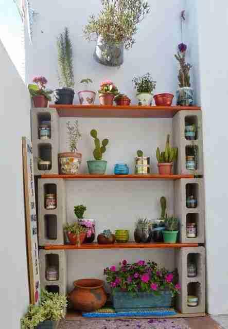 3 Secretos para tener cactus hermosos 4