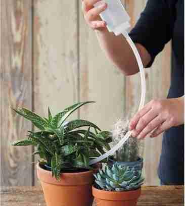 3 Secretos para tener cactus hermosos 6