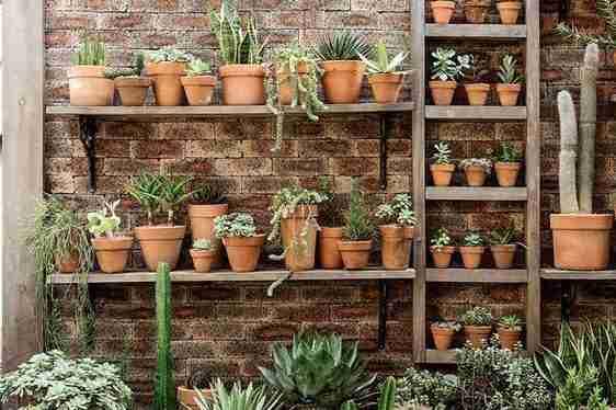 ¿Los cactus son 100% sol? Te lo explico en 10 segundos. 10